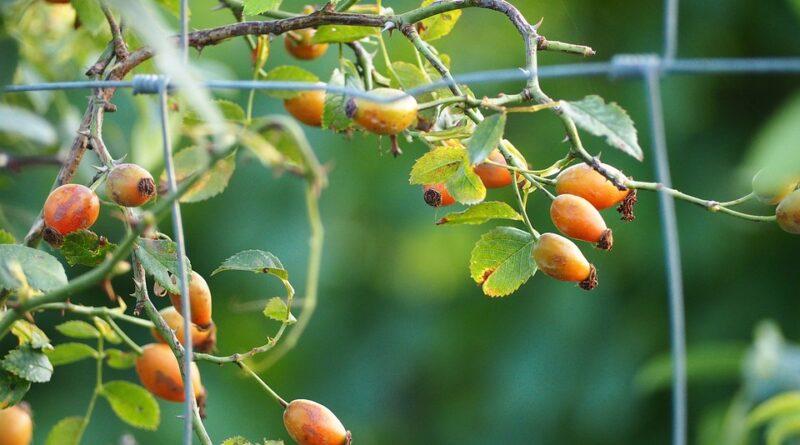vitamíny z přírodních zdrojů